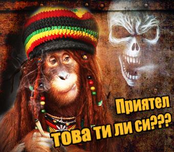 банер маймуна пуши канабис