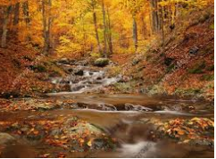 Есенен пейзаж. Водопад в гора с пожълтели есенни листа.